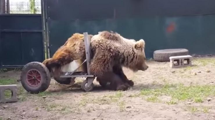 Medved Uško