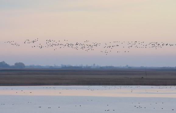 20.000 ždralova okupljalo se na ovom jezeru, koje je njihovo odmorište tokom jesenje selidbe na jug