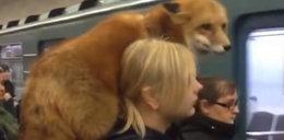 Niespodziewany pasażer w metrze. Podróżni przecierali oczy ze zdumienia
