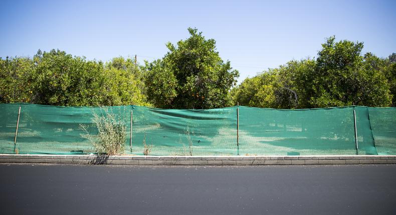 Sprawl may eat vestige of Southern California's citrus empire