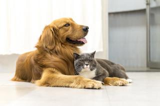 Resort rolnictwa chce czipować obowiązkowo psy i dobrowolnie koty