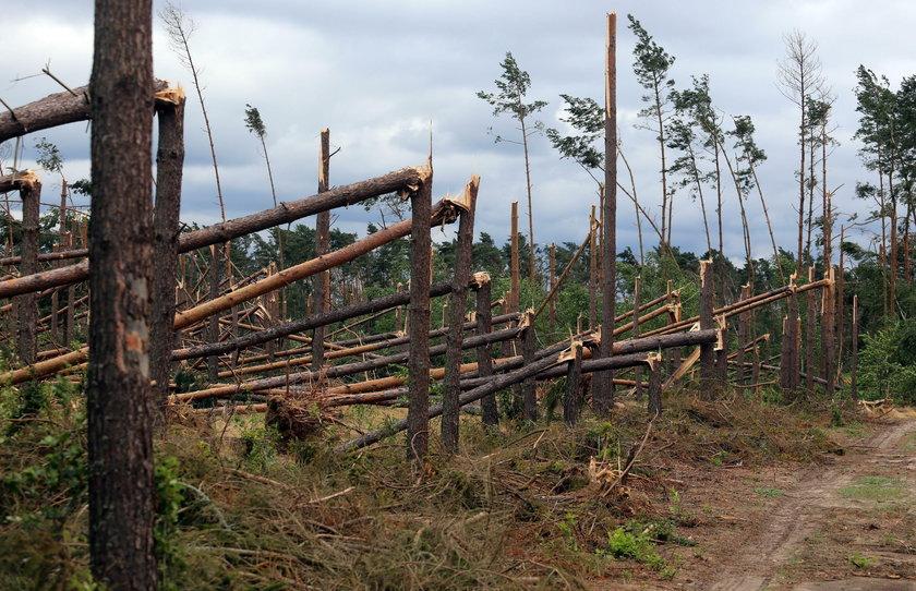 Zniszczenia i powalone drzewa w województwie pomorskim w okolicy miejscowości Suszek