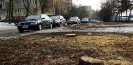 Konflikt na osiedlu. Co ważniejsze, parking czy drzewa?