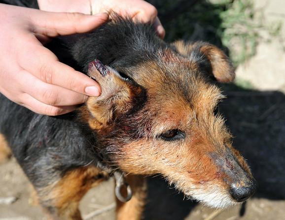 Roditelji dečaka tvrde da je četiri lutalice usmrtio njihov pas (na fotografiji) i da deca nisu maltretirala životinje