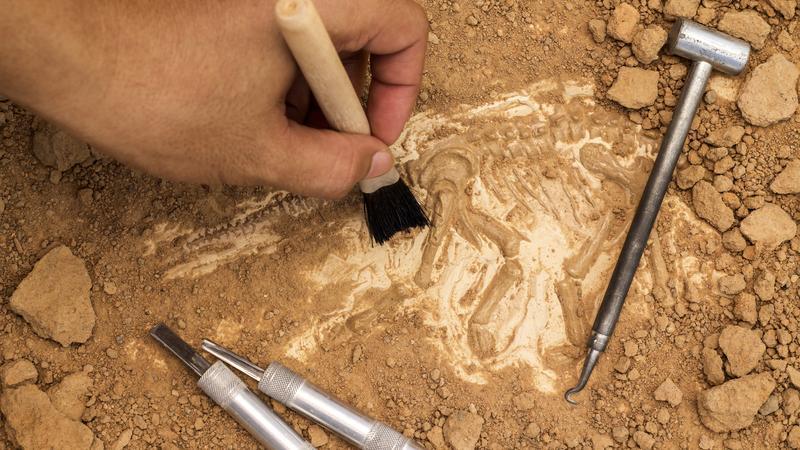 Archeolodzy natrafili na pozostałości pałacu letniego królowej Marysieńki