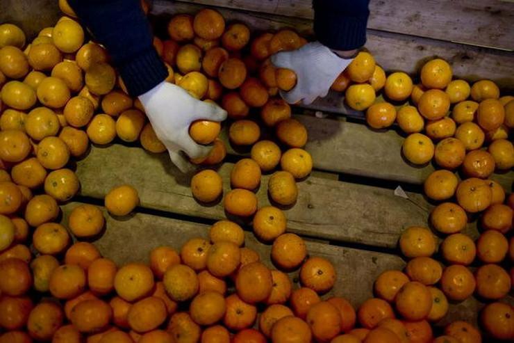533995_mandarine-ap