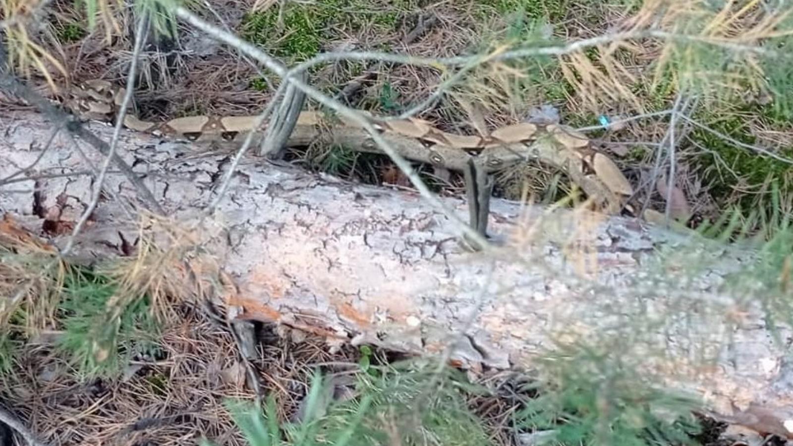 Zamiast grzybów znalazł węża. To gatunek groźny dla człowieka