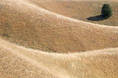 Deliblatska peščara