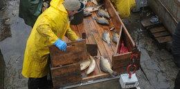 Problemy z karpiem na święta! Coraz trudniej o żywe ryby