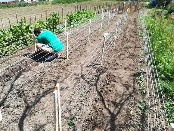 Prouzvodnja organskog voća i povrća iziskuje mnogo rada