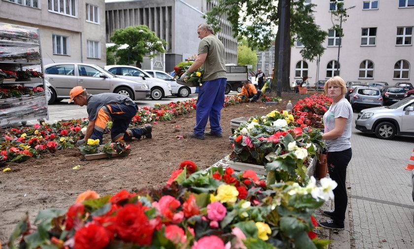 Pod urzędem miasta będą rosnąć nowe kwiaty