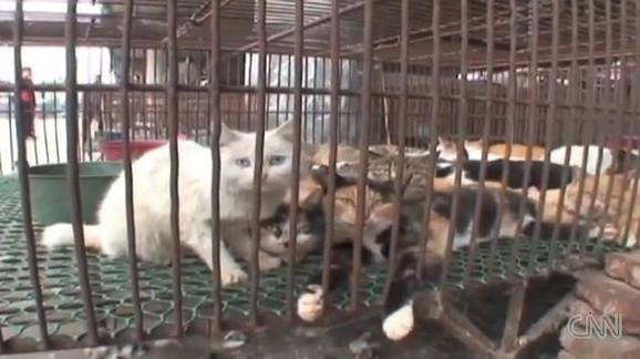 U Kini se i od mačaka prave popularni specijaliteti