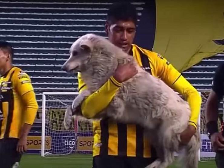 Fudbaler udomio psa