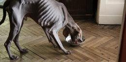 Zwyrodnialcy głodzili psa! Dostali zarzuty!