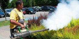 Plaga komarów w Oświęcimiu. Jak sprytnie pozbyć się tych owadów?