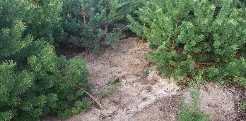 Horror! Wywieźli 17-latka do lasu i kazali kopać mu grób