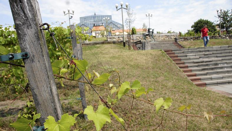 Park Winny w Zielonej Górze