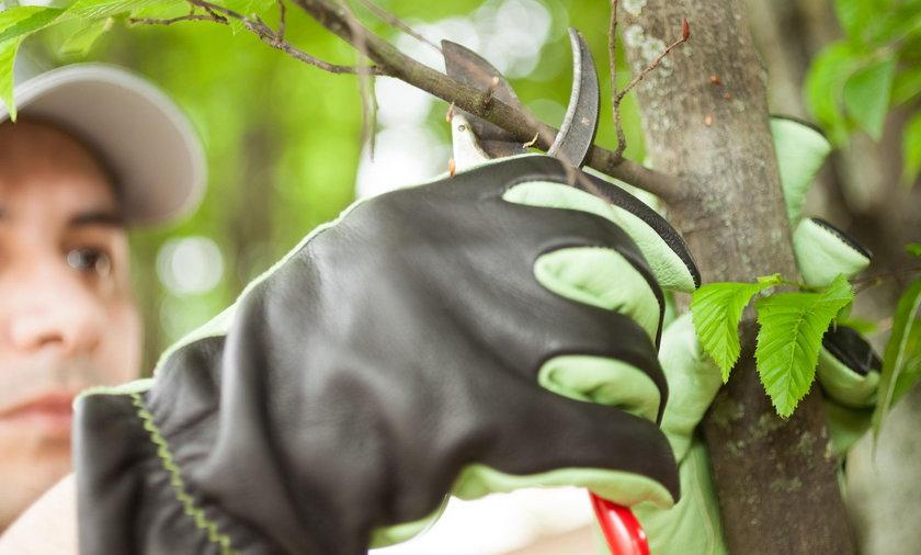 Mężczyzna obcina gałęzie