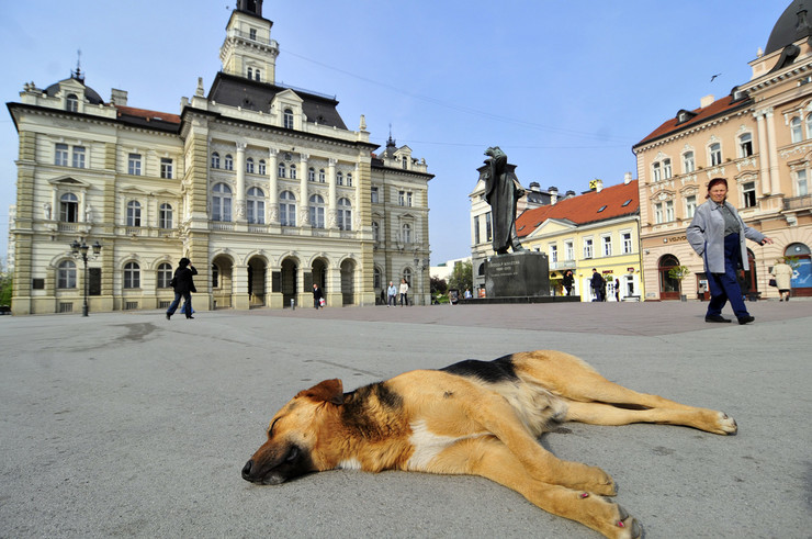 Novi Sad Trg Slobode foto R Getel (2)