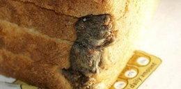 Obrzydliwe znaleziska w jedzeniu