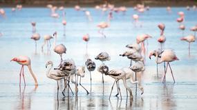 Luksusowy kurort poszukuje opiekuna... flamingów