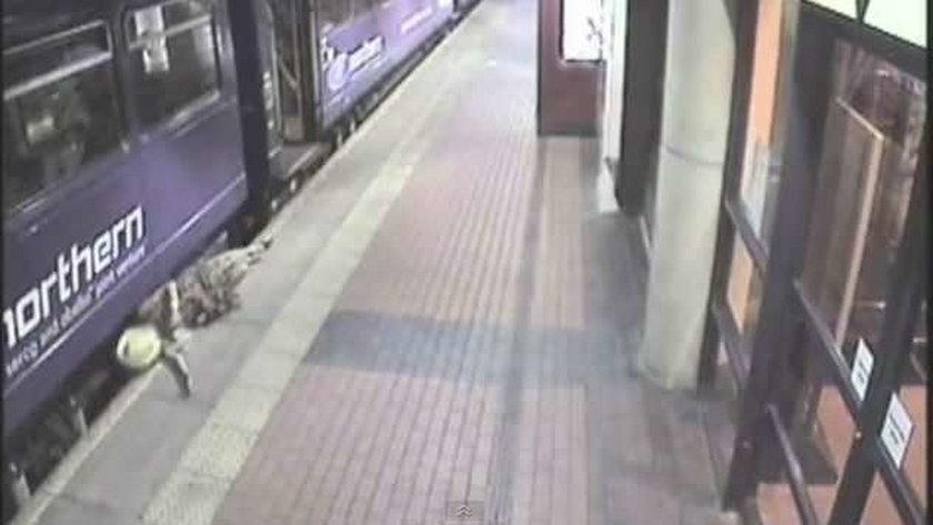 Pijana kobieta wpadła pod pociąg i przeżyła. WIDEO