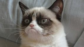 Grumpy Cat zostanie bohaterem filmu