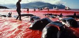 Bestialski mord w imię tradycji w Europie! FILM