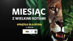 #PiątkaDlaRysia - ratujemy polskie drapieżne koty