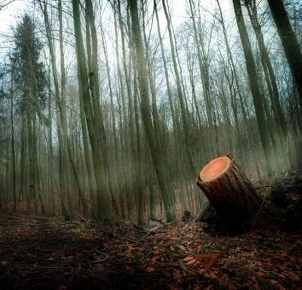 – Zakaz o prywatyzacji lasów powinien być zapisany w konstytucji. Byłoby to pewniejsze – uważa jednak Stanisław Żelichowski, poseł PSL.