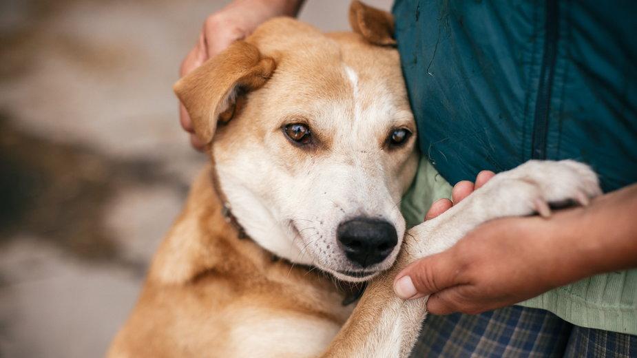 Pandemię łatwiej przetrwają właściciele zwierząt. Ich obecność łagodzi stres