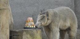 Ależ ten tort jest pyszny!