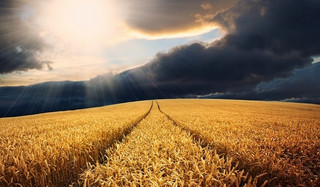 Spółdzielczy model rolnictwa