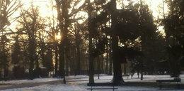 Zobaczcie Park Oliwski zimą!