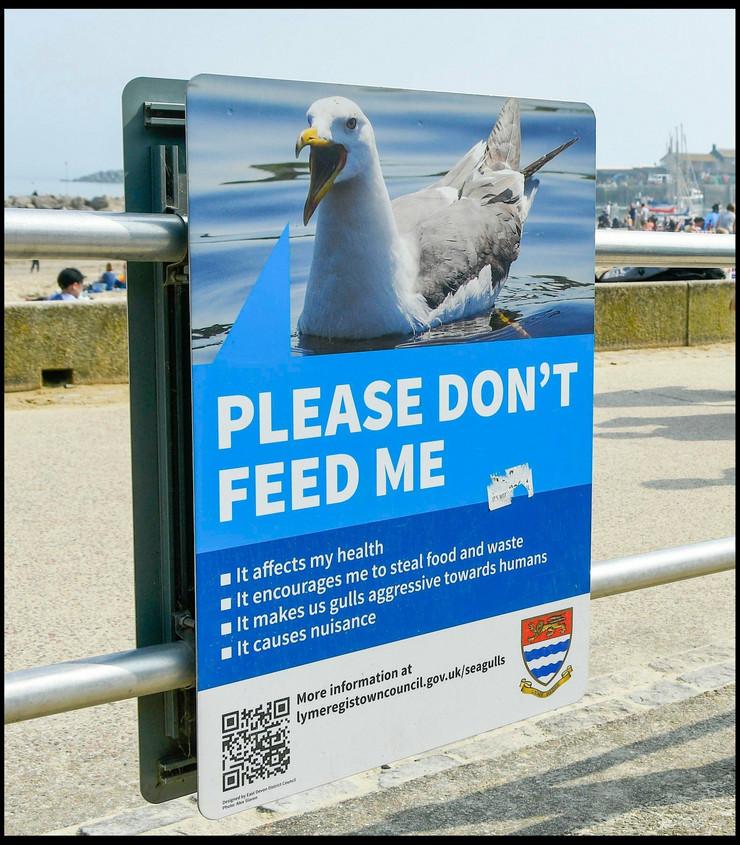 dorset seagulls profimedia-0426951755