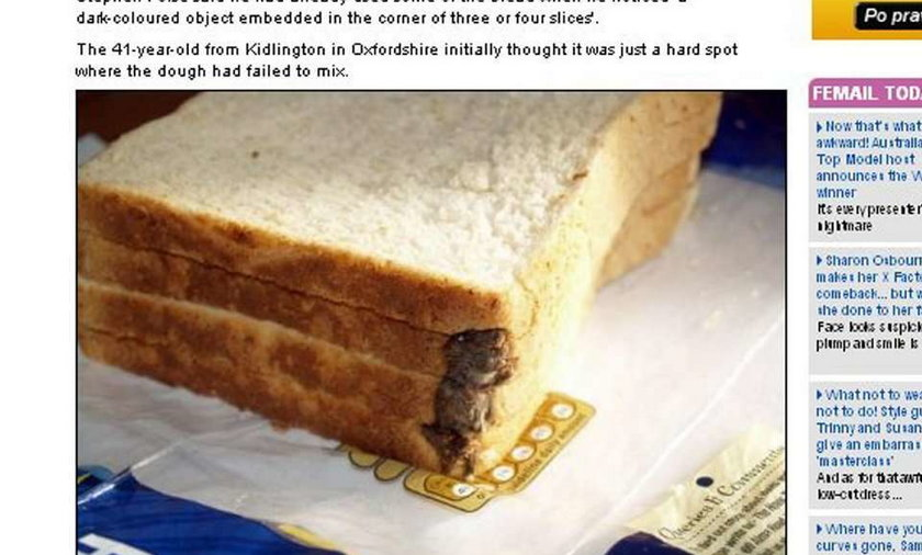 Ohyda! Mysie zwłoki w chlebie!