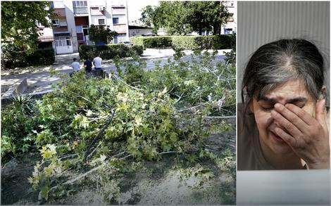 Drvo koje je povredilo dečaka i uplakana baka