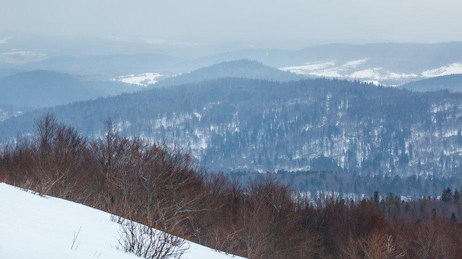 Kolektyw Wilczyce broni lasu. Jak wygląda życie w Bieszczadach?