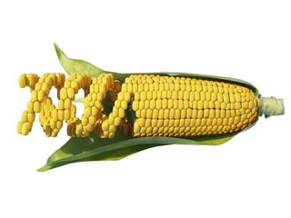 Genetically modified corn, illustration