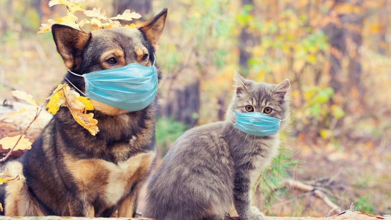Pies i kot w maseczkach
