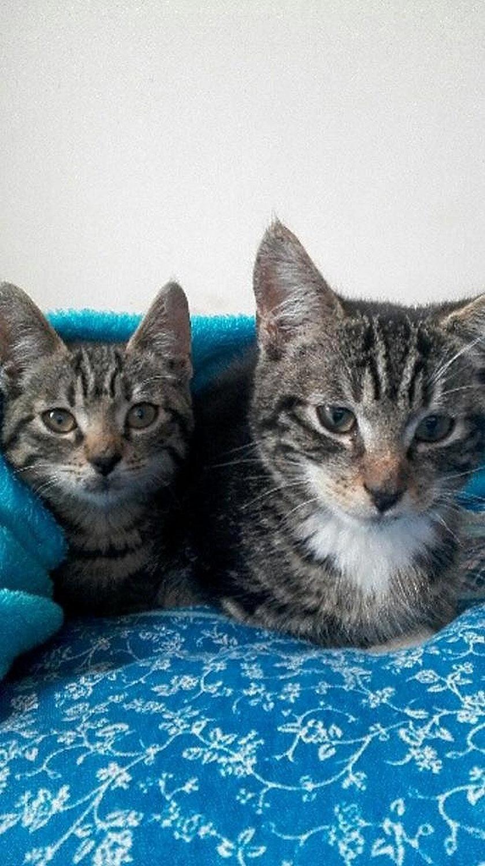 Jowita Sznaza szuka swoich kotów