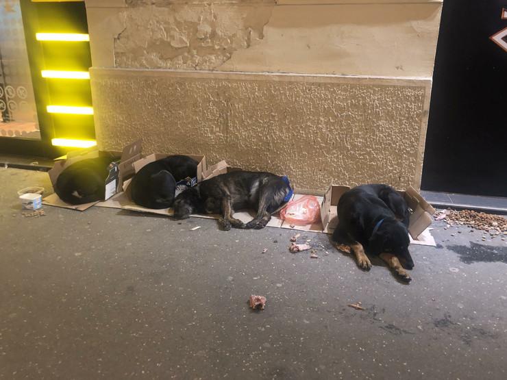 Rasturene kućice za napuštene pse
