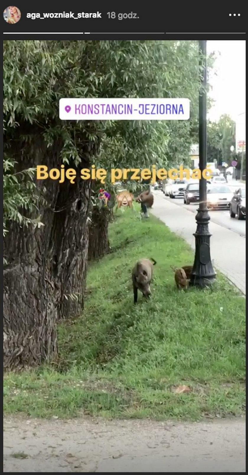 Instastories Agnieszki Woźniak-Starak