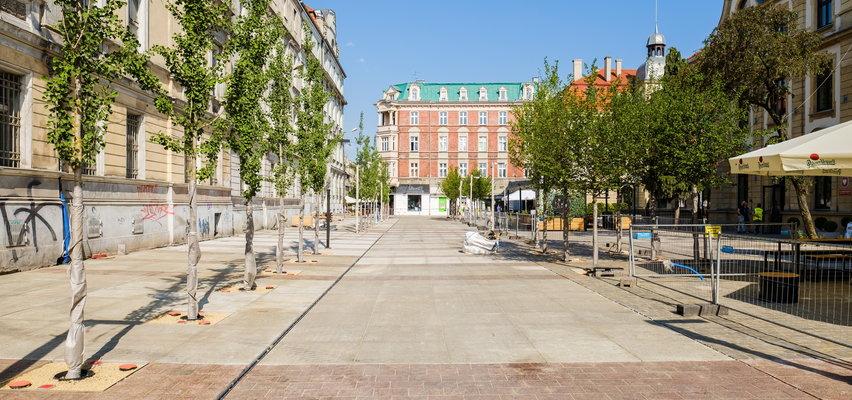 Prezydent Katowic chwali się, że Katowice są najbardziej zielone w Polsce. Mieszkańcy pytają o wycięte drzewa