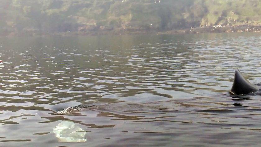 Wybrali się na kajaki. W wodzie czaiło się coś strasznego
