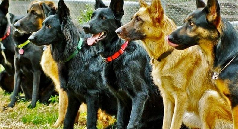 Sniffer dogs to be used to detect items in Safe deposit boxes at Barclays Bank