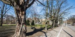 Poznań będzie betonową dżunglą?