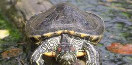 Zoo mogło uśmiercić żółwie