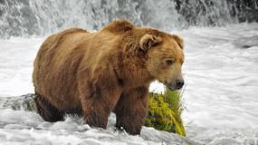 USA - Park Narodowy Katmai