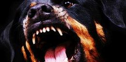 Agresywny pies terroryzuje moje podwórko